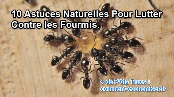 10 astuces naturelles pour lutter contre les fourmis. Black Bedroom Furniture Sets. Home Design Ideas