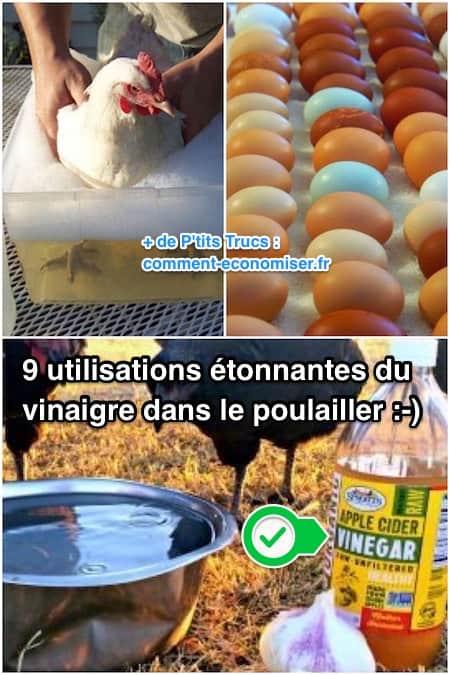 9 utilisations tonnantes du vinaigre dans le poulailler - Comment faire du vinaigre de cidre ...