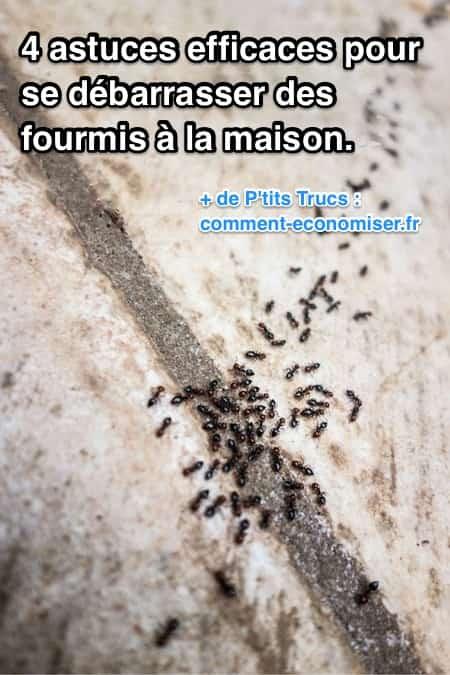 4 astuces efficaces pour se d barrasser des fourmis la for Anti fourmi naturel maison
