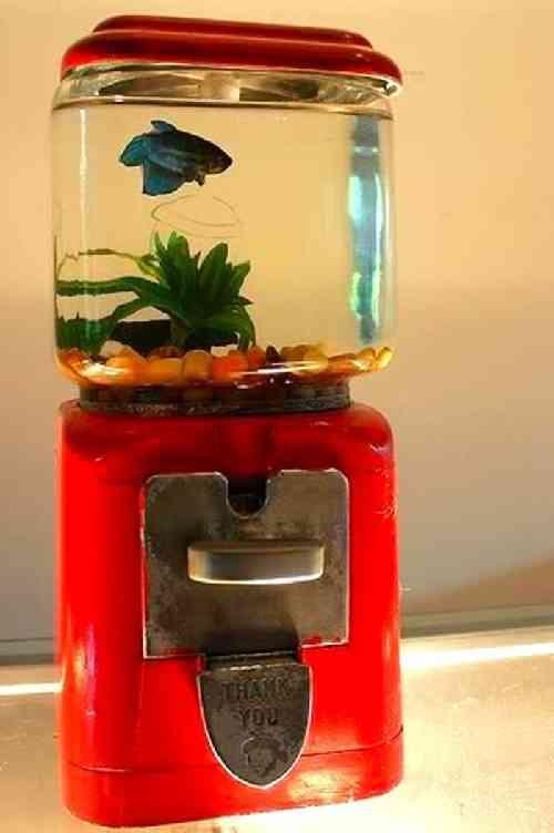16 objets recycl s que vous aimeriez bien avoir la maison for Bocal aquarium original