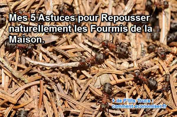 mes 5 astuces pour repousser naturellement les fourmis de la maison. Black Bedroom Furniture Sets. Home Design Ideas