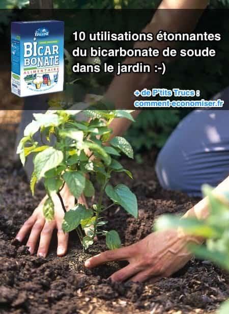 10 utilisations 201 tonnantes du bicarbonate de soude dans le jardin
