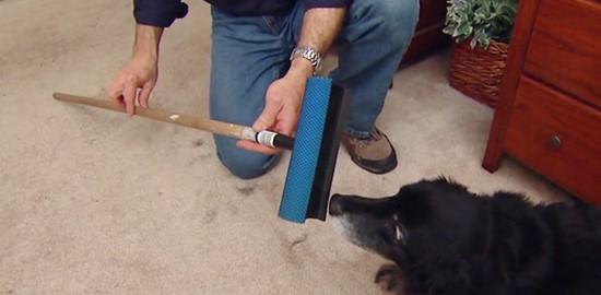 10 astuces simples pour conomiser de l 39 argent quand on a un chien. Black Bedroom Furniture Sets. Home Design Ideas