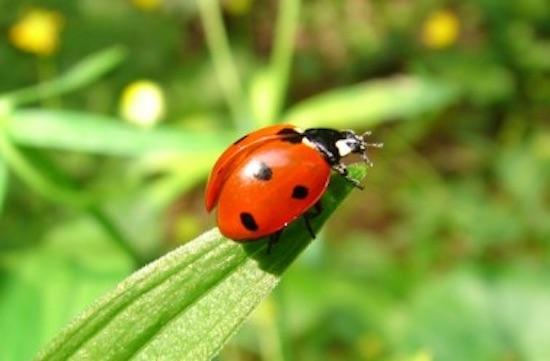 9 animaux qui prot gent votre jardin potager des nuisibles for Le jardin qui dit non