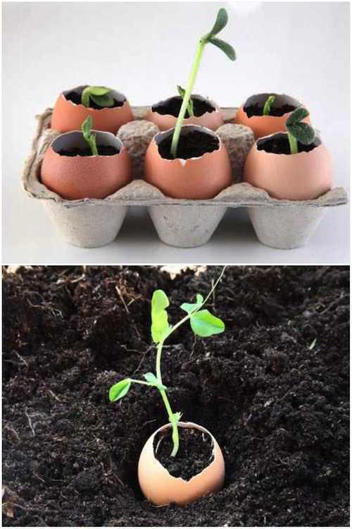 23 astuces ing nieuses pour vous simplifier le jardinage - Faire pousser citronnier ...