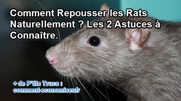 comment repousser les rats naturellement les 2 astuces conna tre. Black Bedroom Furniture Sets. Home Design Ideas