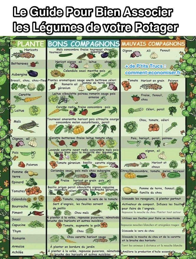 Le guide pratique pour bien associer les l gumes de votre - Association des legumes au potager ...