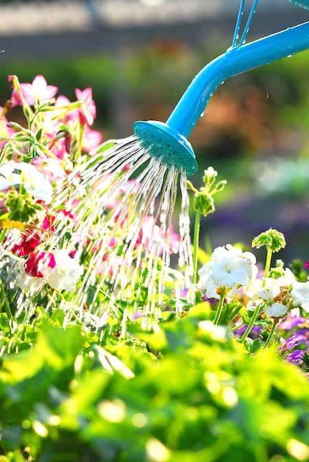 6 utilisations de l 39 eau oxyg n e dans le jardin que for Combien coute de l eau oxygenee