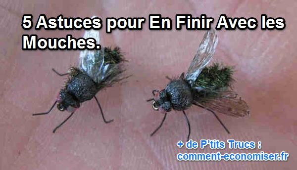 Liminer mouches maison maison cologique maison saine loigner les insectes sans insecticide - Comment chasser les mouches ...