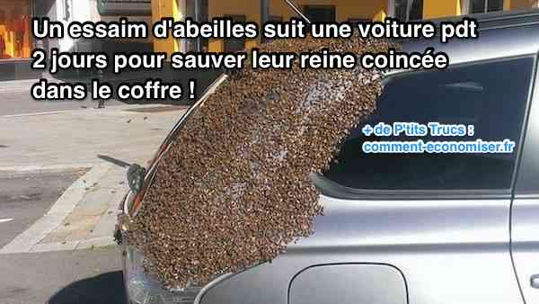 un essaim d 39 abeilles suit une voiture pendant 2 jours pour. Black Bedroom Furniture Sets. Home Design Ideas