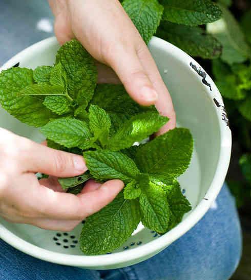 10 rem des efficaces pour arr ter des vomissements - Comment faire pousser de la menthe ...
