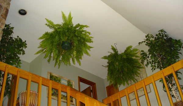 9 plantes d 39 int rieur qui nettoient l 39 air et qui sont for Fougere interieur
