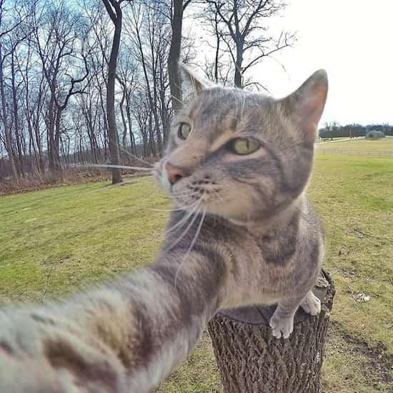 Ce chat qui se prend en photo tout seul prend de meilleurs for Miroir qui tombe tout seul
