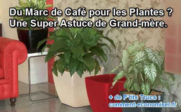 du marc de caf pour les plantes une super astuce de grand m re. Black Bedroom Furniture Sets. Home Design Ideas