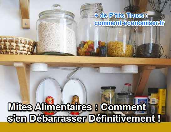Mites alimentaires comment s 39 en d barrasser d finitivement - Fourmis comment s en debarrasser ...