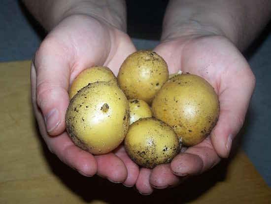 10 choses que vous ne devriez plus mettre au frigo - Comment conserver des pommes de terre coupees ...