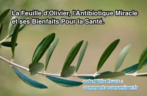 Feuille-dolivier-antibiotique-nature