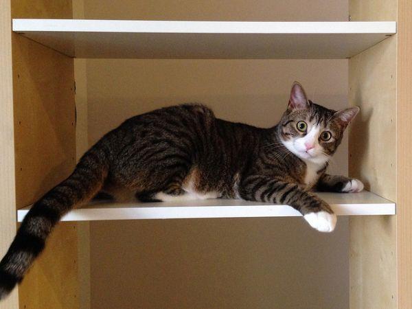 mon secret pour emp cher mon chat de grimper sur les meubles. Black Bedroom Furniture Sets. Home Design Ideas