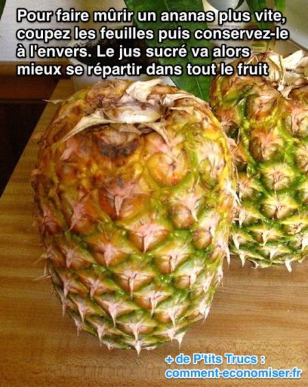 L 39 astuce pour faire m rir un ananas rapidement - Comment pousse l ananas ...