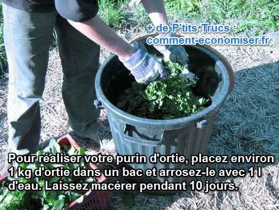 Comment faire pousser de belles tomates 100 naturelles - Comment faire du purin d ortie ...