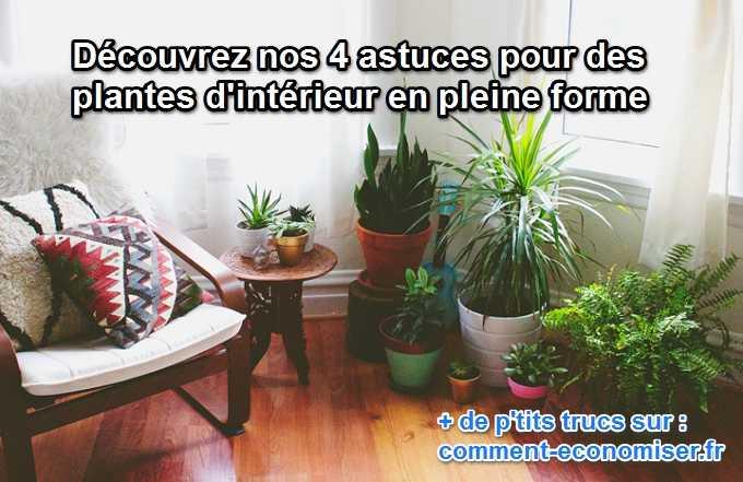 4 astuces pour des plantes d 39 int rieur en pleine forme. Black Bedroom Furniture Sets. Home Design Ideas
