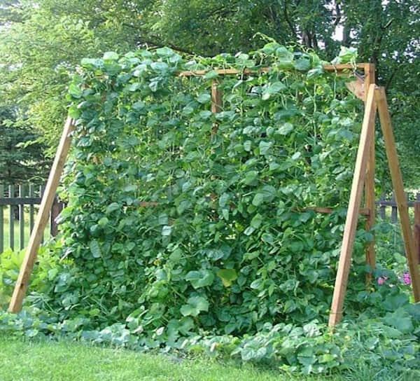 comment faire pousser des concombres 224 la verticale pour en avoir plus avec moins de place
