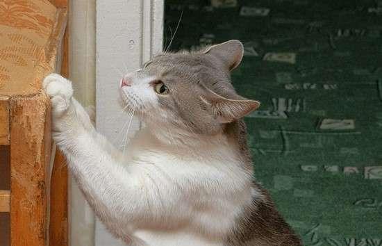 18 utilisations magiques du vaporub que tout le monde - Faire fuir les chats ...