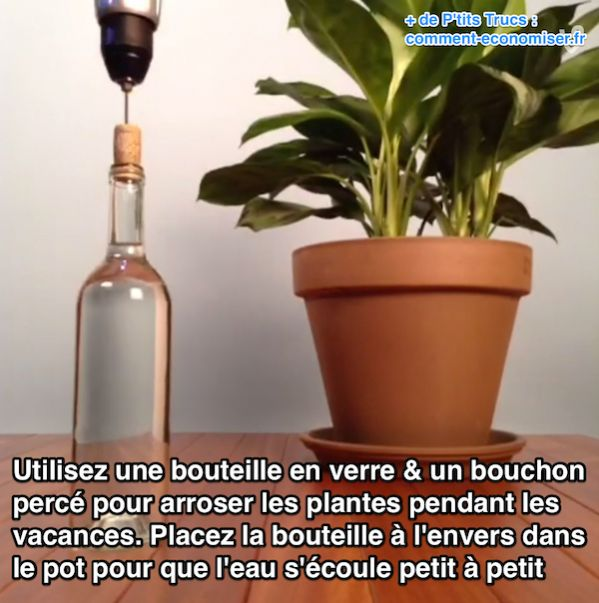 Comment arroser les plantes quand on parte en vacances