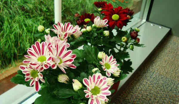 9 plantes d 39 int rieur qui nettoient l 39 air et qui sont - Les plantes depolluantes purifier l air de la maison ...