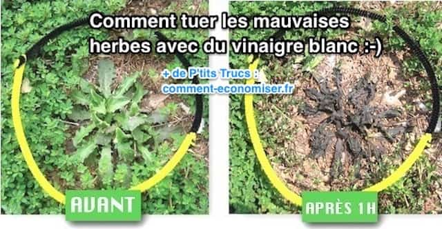 L 39 astuce rapide pour tuer les mauvaises herbes avec du - Comment desherber avec du vinaigre blanc ...