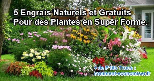 Engrais Naturel Marc De Cafe Banane