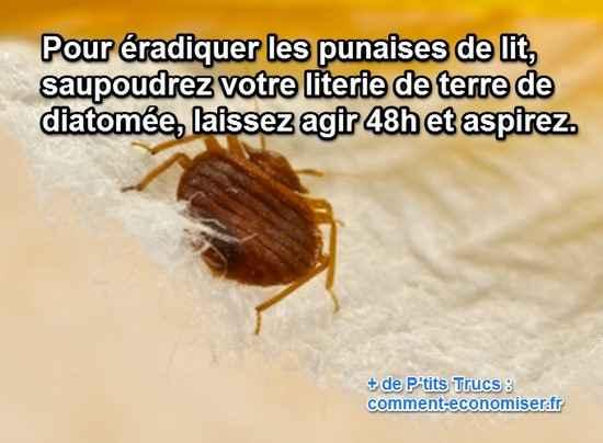 Le produit miracle pour radiquer les punaises de lit rapidement - Punaise de lit traitement naturel ...