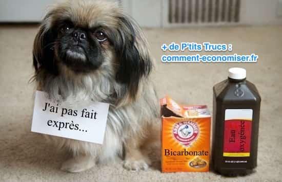 3 d tachants maison pour faire dispara tre les taches de - Enlever odeur urine chien ...