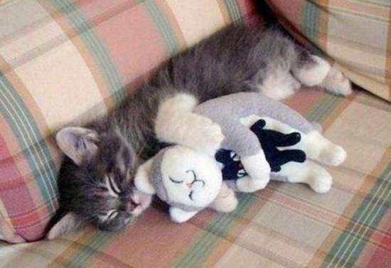 17 photos de chats qui sont certainement les meilleures - Comment se couper les veines pour mourir ...